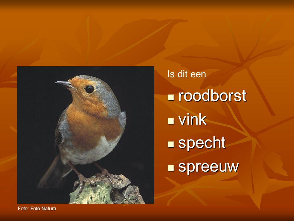Is dit een roodborst vink specht spreeuw Foto: Foto Natura