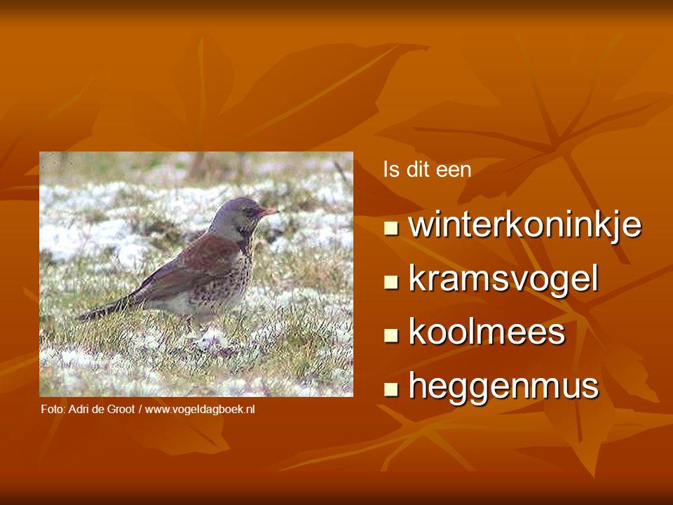 winterkoninkje kramsvogel koolmees heggenmus Is dit een