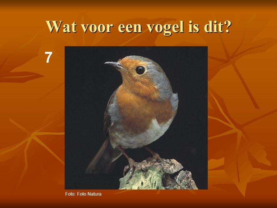 Wat voor een vogel is dit