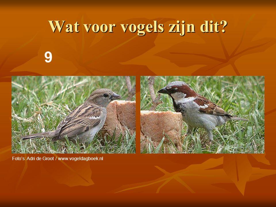 Wat voor vogels zijn dit