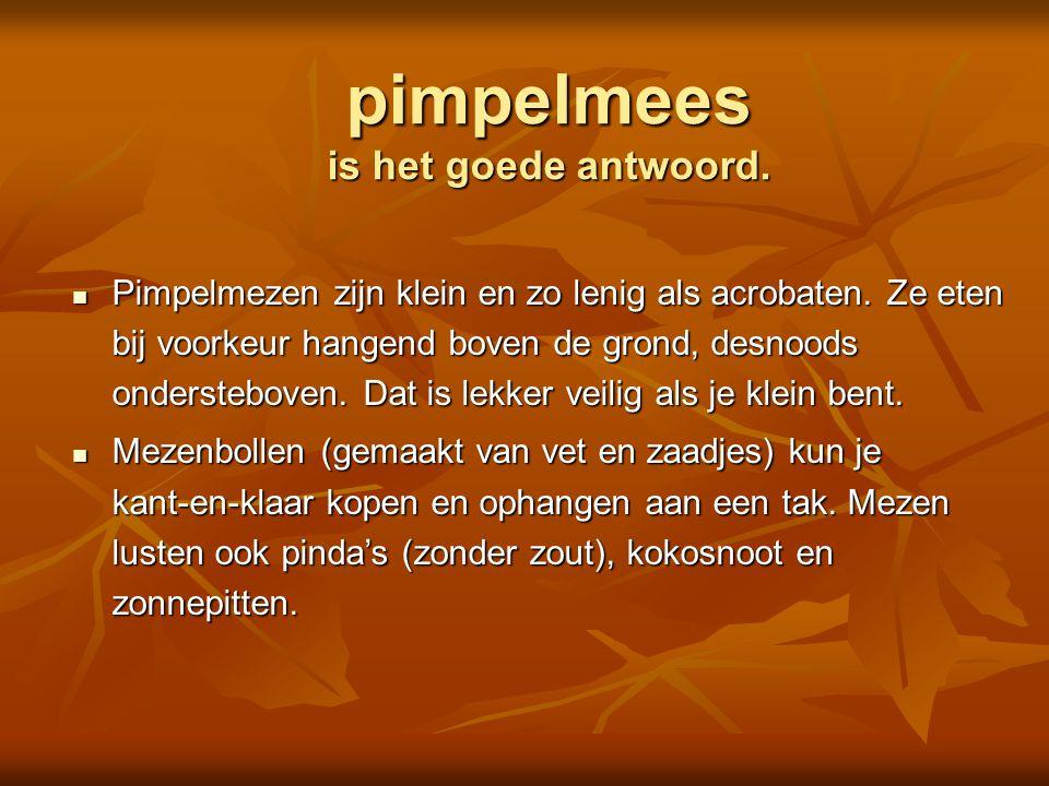 pimpelmees is het goede antwoord.