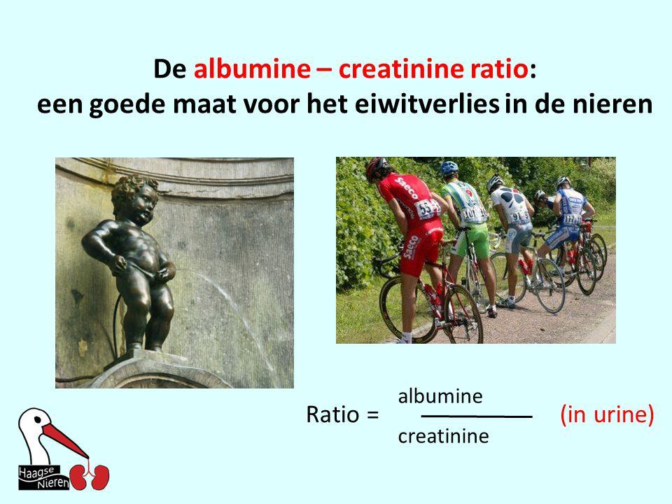 De albumine – creatinine ratio: een goede maat voor het eiwitverlies in de nieren