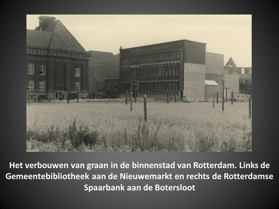 Het verbouwen van graan in de binnenstad van Rotterdam