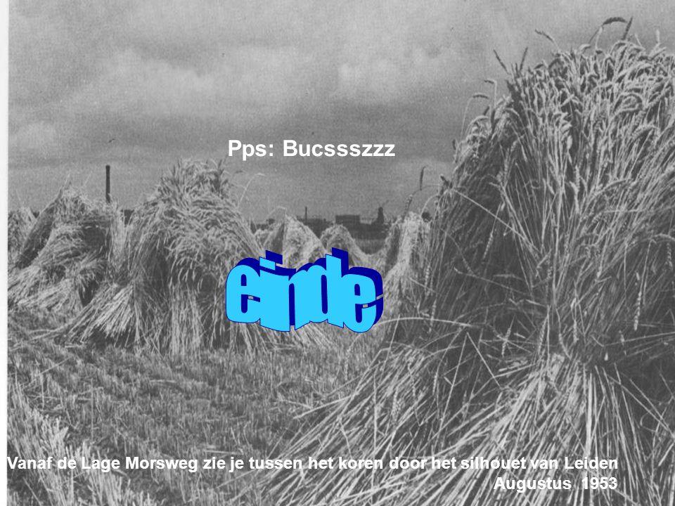 Pps: Bucssszzz einde. Vanaf de Lage Morsweg zie je tussen het koren door het silhouet van Leiden. Augustus 1953.