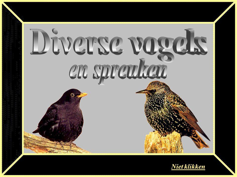 Diverse vogels en spreuken Niet klikken