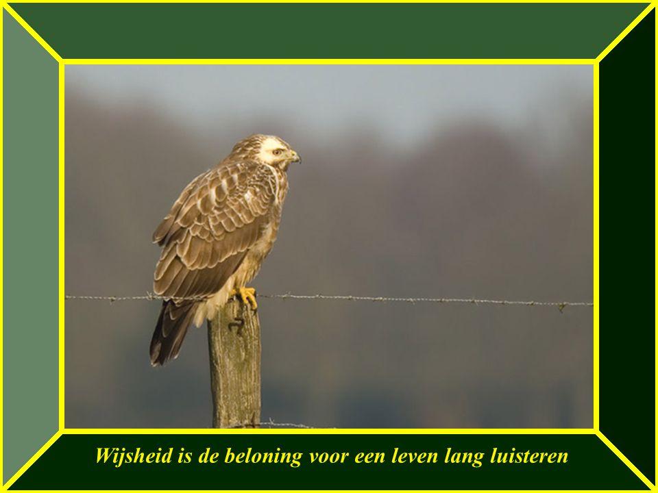 Wijsheid is de beloning voor een leven lang luisteren