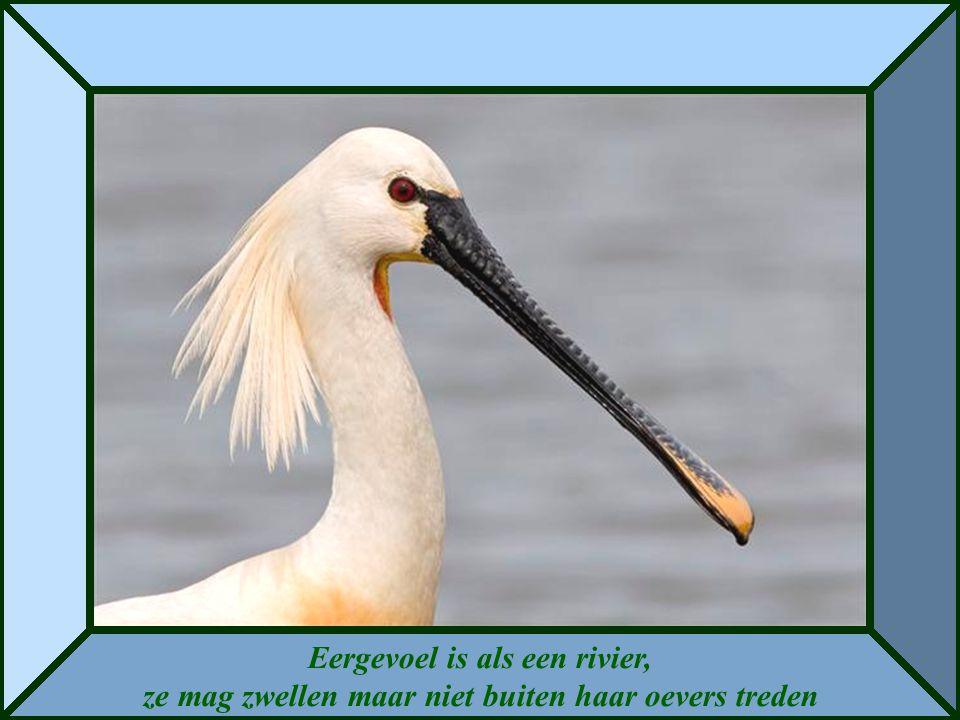 Eergevoel is als een rivier, ze mag zwellen maar niet buiten haar oevers treden