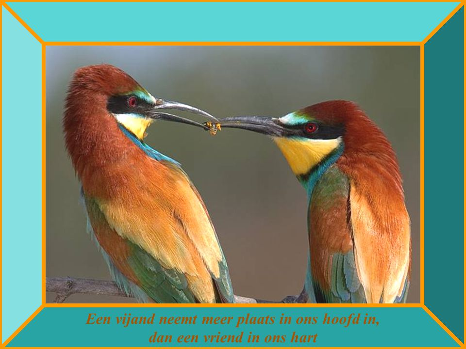 Een vijand neemt meer plaats in ons hoofd in, dan een vriend in ons hart