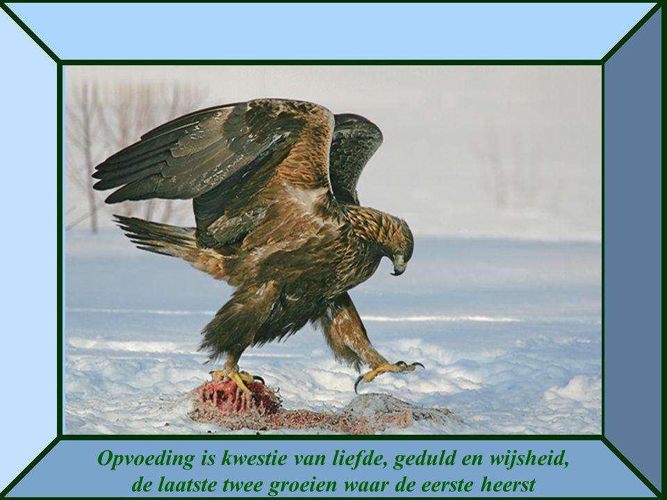 Opvoeding is kwestie van liefde, geduld en wijsheid, de laatste twee groeien waar de eerste heerst