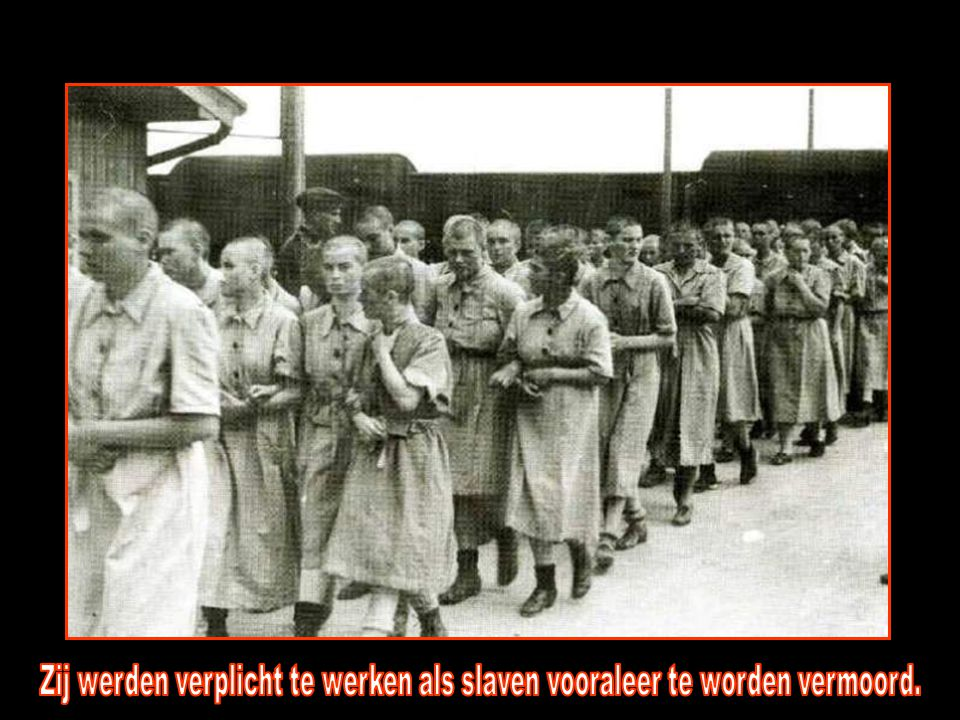 Zij werden verplicht te werken als slaven vooraleer te worden vermoord.