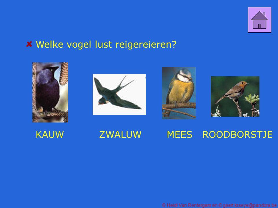 Welke vogel lust reigereieren
