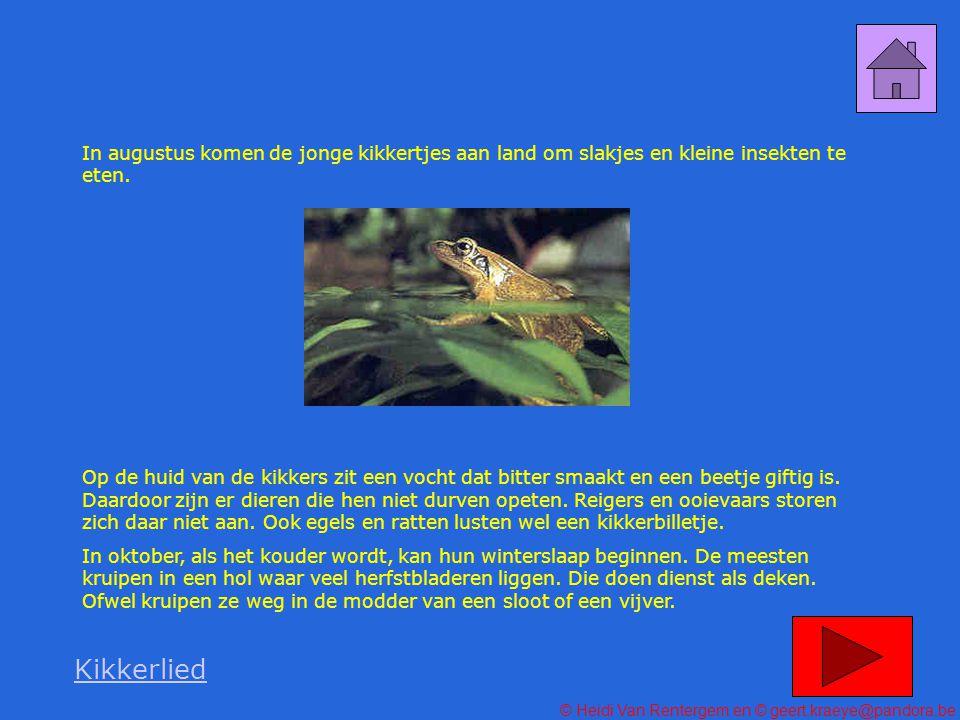 In augustus komen de jonge kikkertjes aan land om slakjes en kleine insekten te eten.