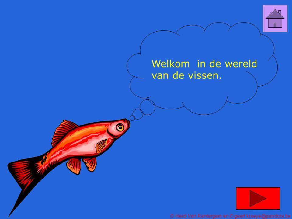 Welkom in de wereld van de vissen.