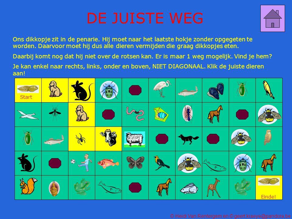 DE JUISTE WEG