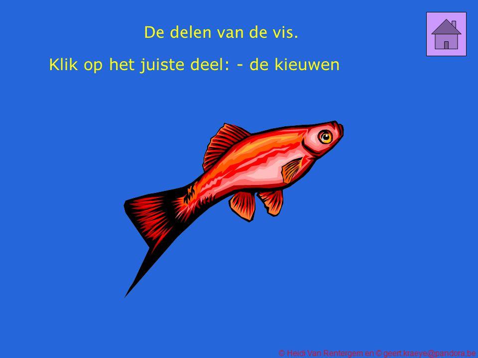 De delen van de vis. Klik op het juiste deel: - de kieuwen