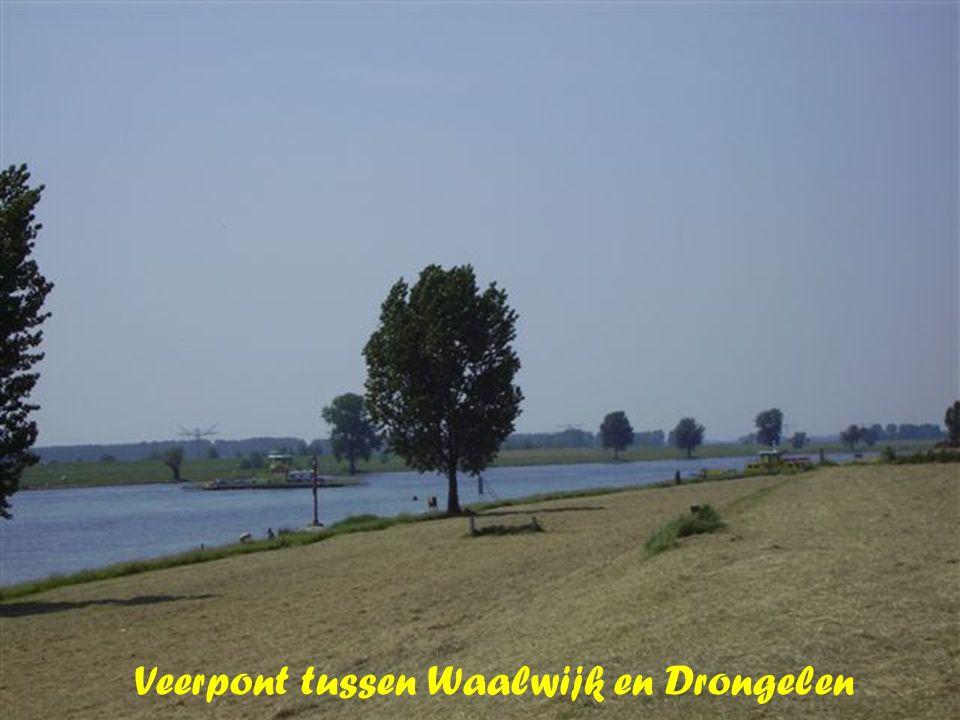 Veerpont tussen Waalwijk en Drongelen