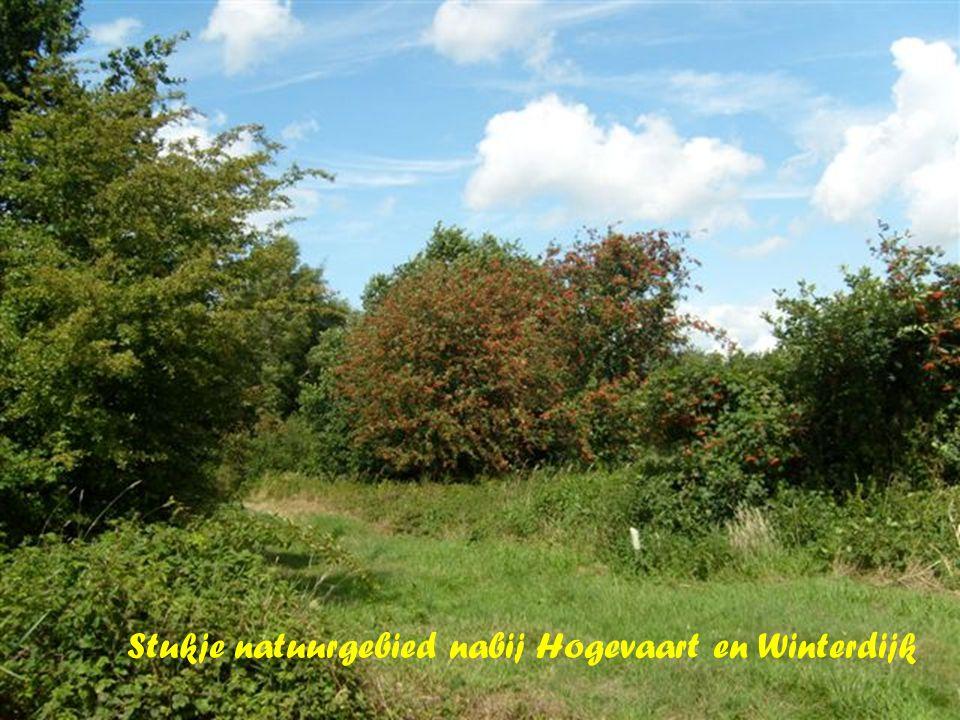 Stukje natuurgebied nabij Hogevaart en Winterdijk