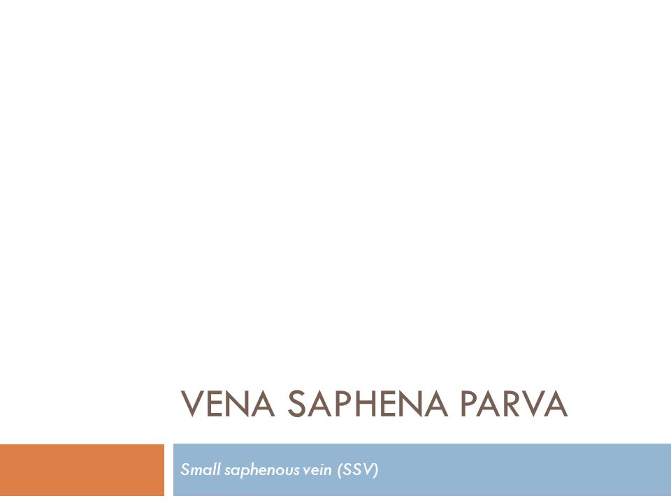 Small saphenous vein (SSV)