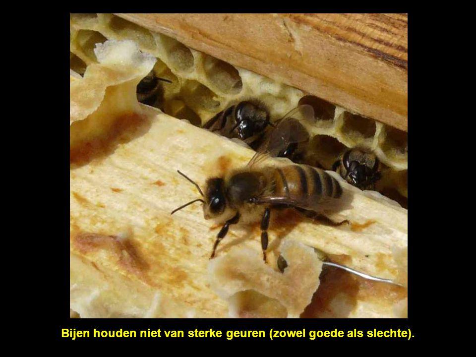 Bijen houden niet van sterke geuren (zowel goede als slechte).