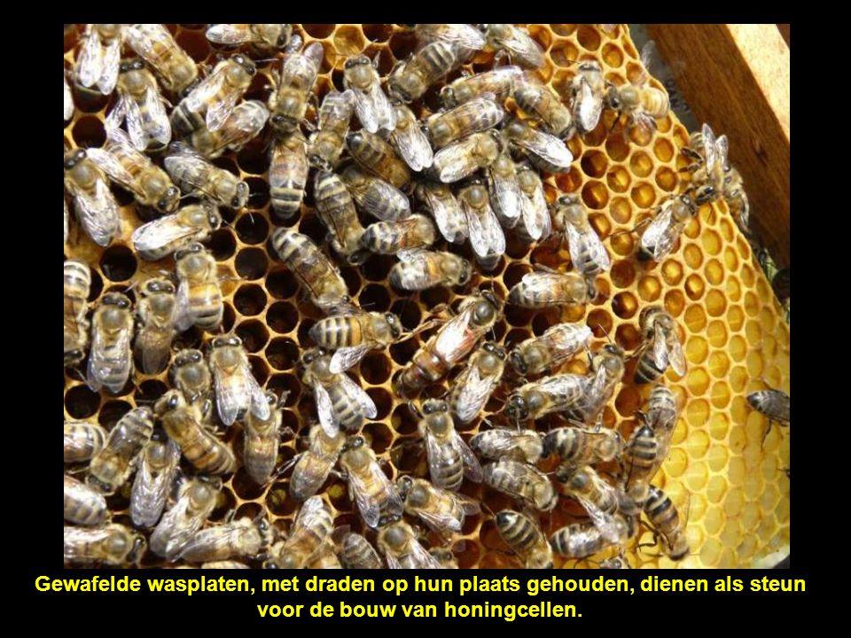 voor de bouw van honingcellen.