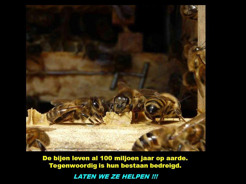 De bijen leven al 100 miljoen jaar op aarde