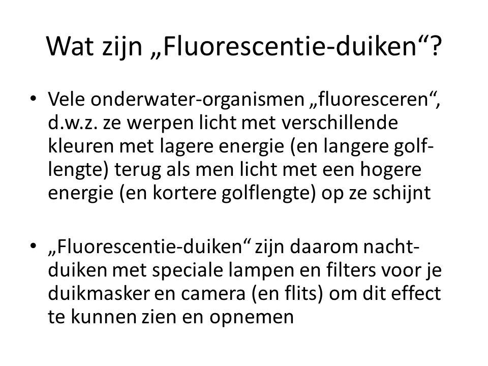 """Wat zijn """"Fluorescentie-duiken"""
