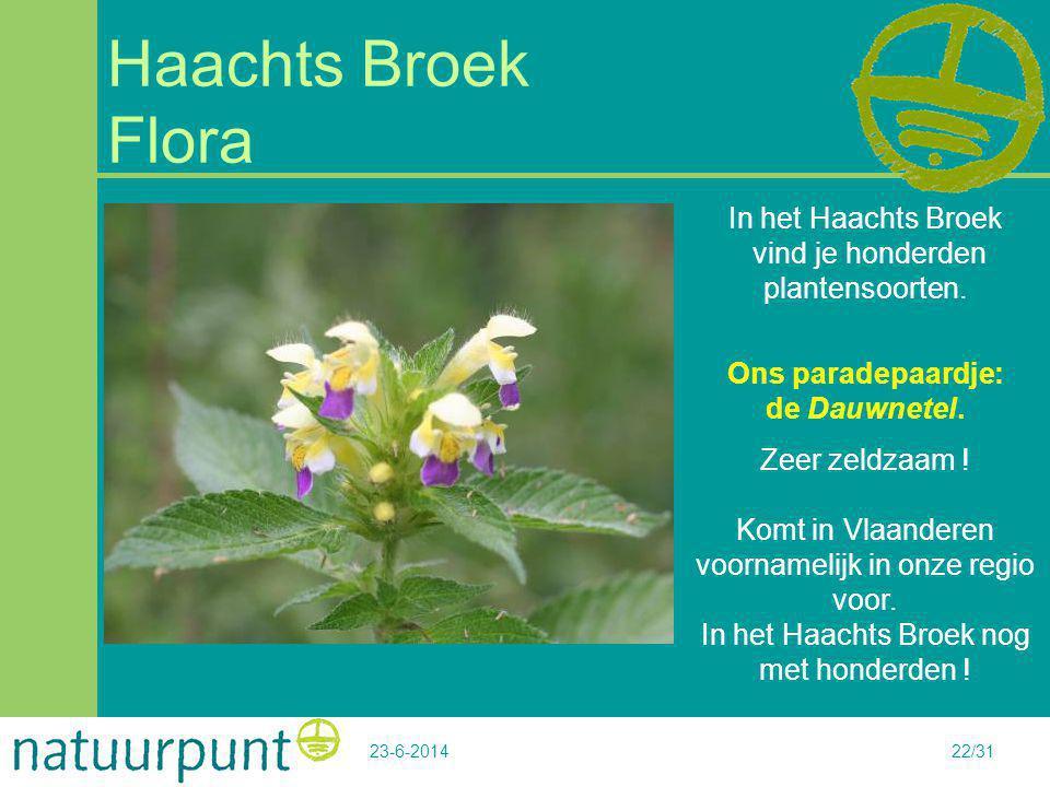 In het Haachts Broek vind je honderden plantensoorten.