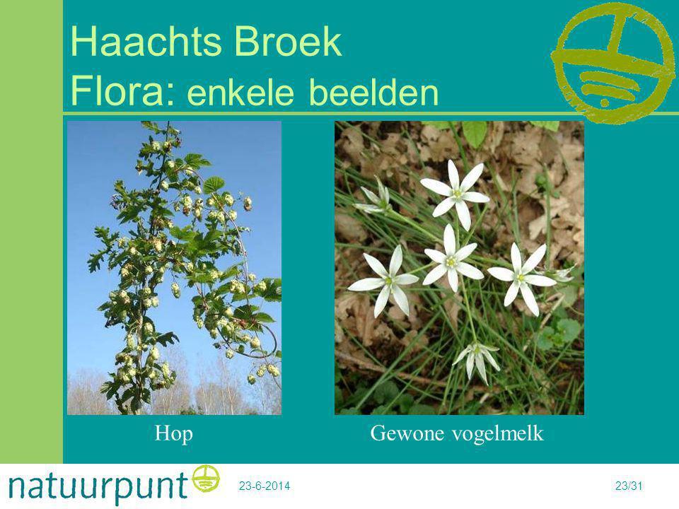 Haachts Broek Flora: enkele beelden