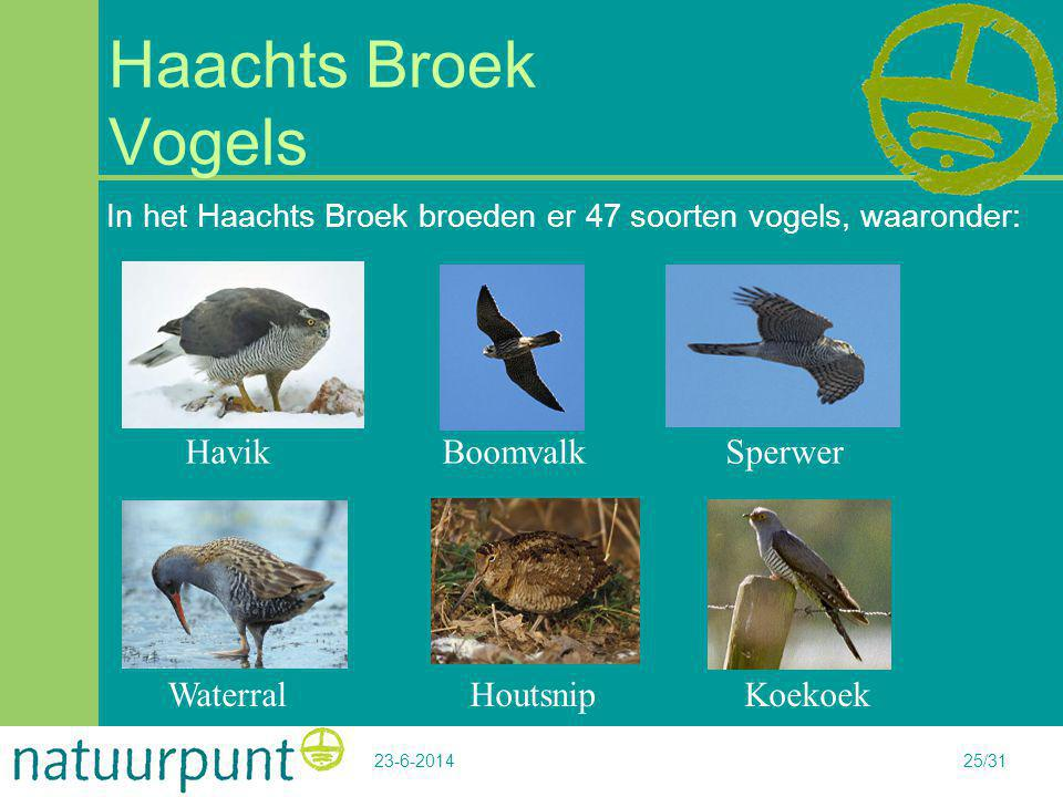Haachts Broek Vogels Havik Boomvalk Sperwer Waterral Houtsnip Koekoek