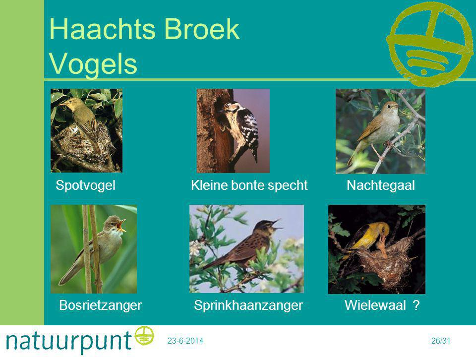 Haachts Broek Vogels Spotvogel Kleine bonte specht Nachtegaal