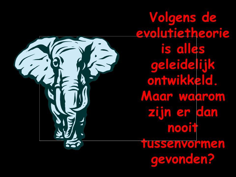 Volgens de evolutietheorie is alles geleidelijk ontwikkeld