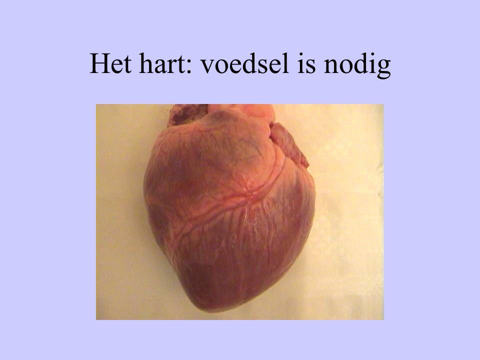 Het hart: voedsel is nodig