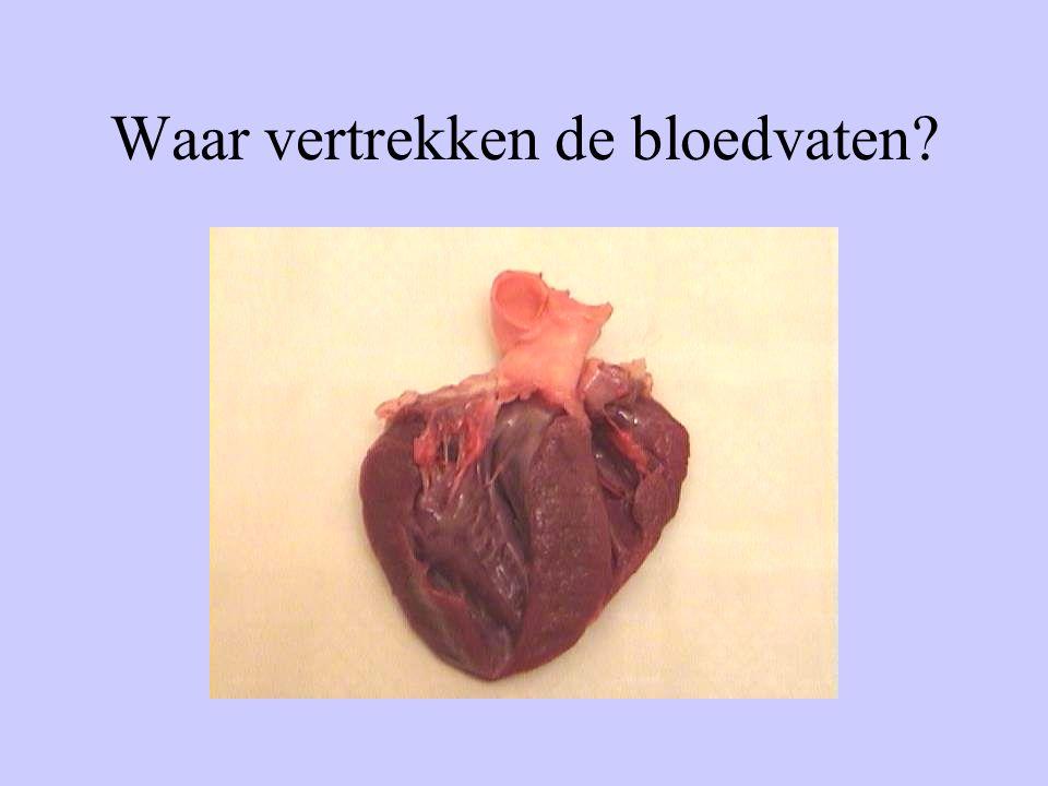 Waar vertrekken de bloedvaten