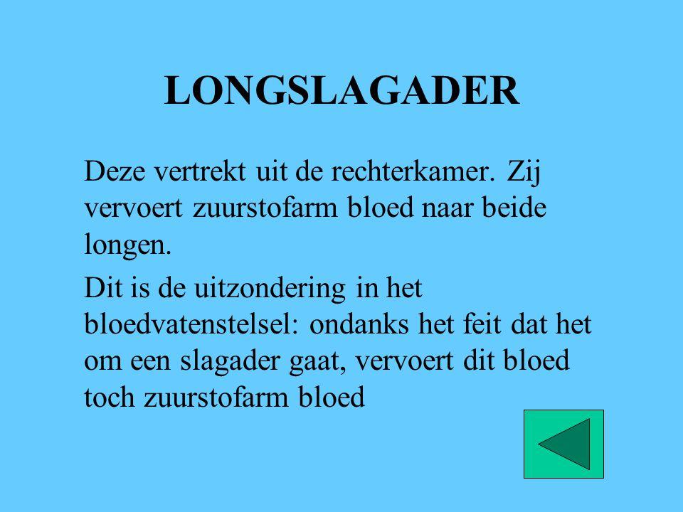 LONGSLAGADER Deze vertrekt uit de rechterkamer. Zij vervoert zuurstofarm bloed naar beide longen.