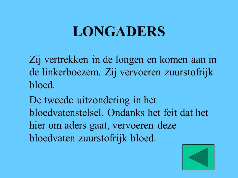 LONGADERS Zij vertrekken in de longen en komen aan in de linkerboezem. Zij vervoeren zuurstofrijk bloed.
