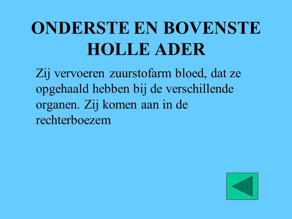 ONDERSTE EN BOVENSTE HOLLE ADER