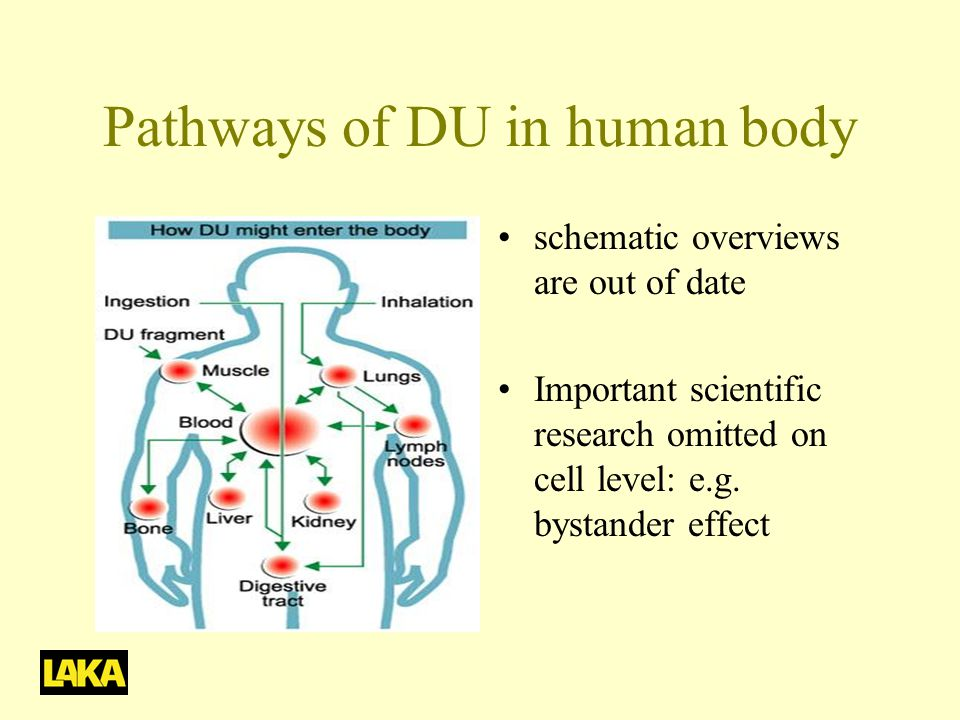 Pathways of DU in human body