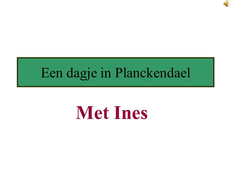 Een dagje in Planckendael