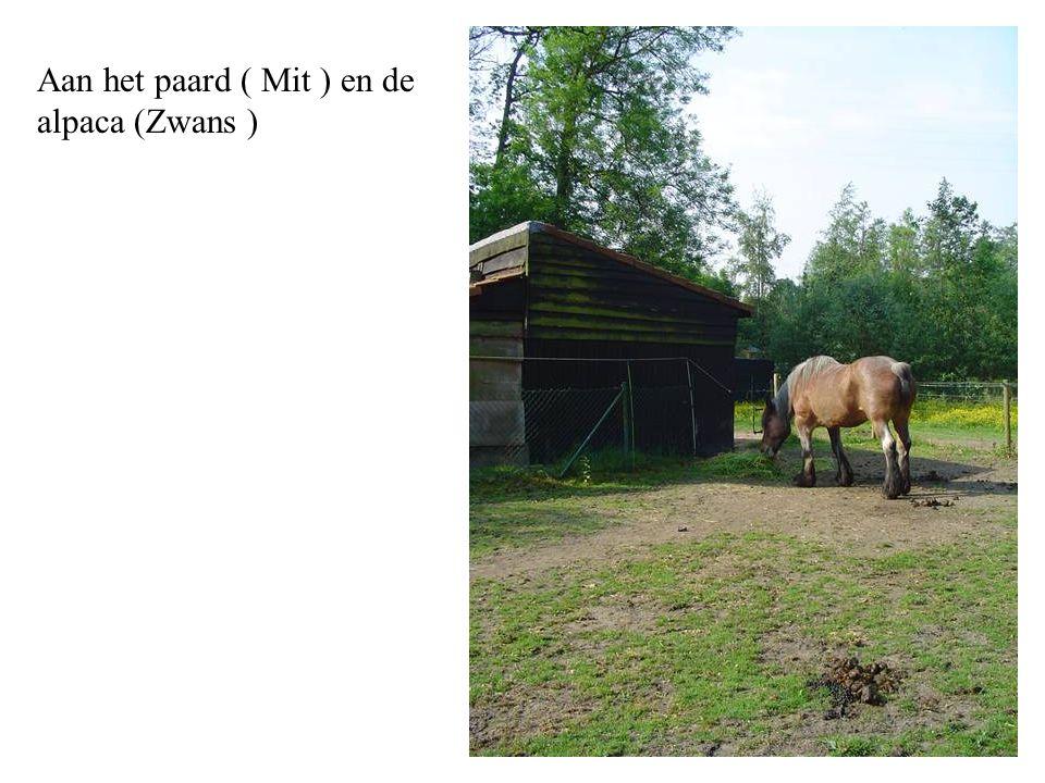 Aan het paard ( Mit ) en de alpaca (Zwans )