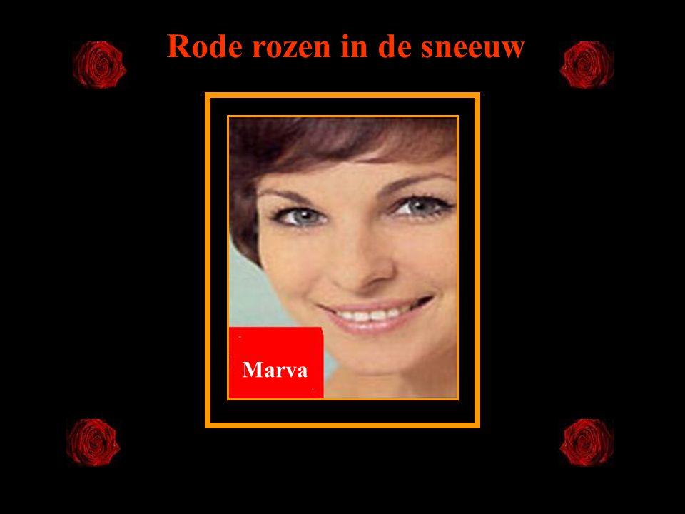 Rode rozen in de sneeuw Marva