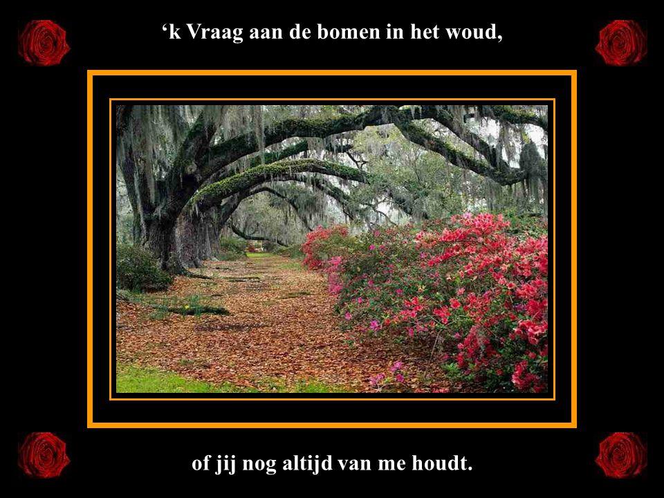 'k Vraag aan de bomen in het woud, of jij nog altijd van me houdt.