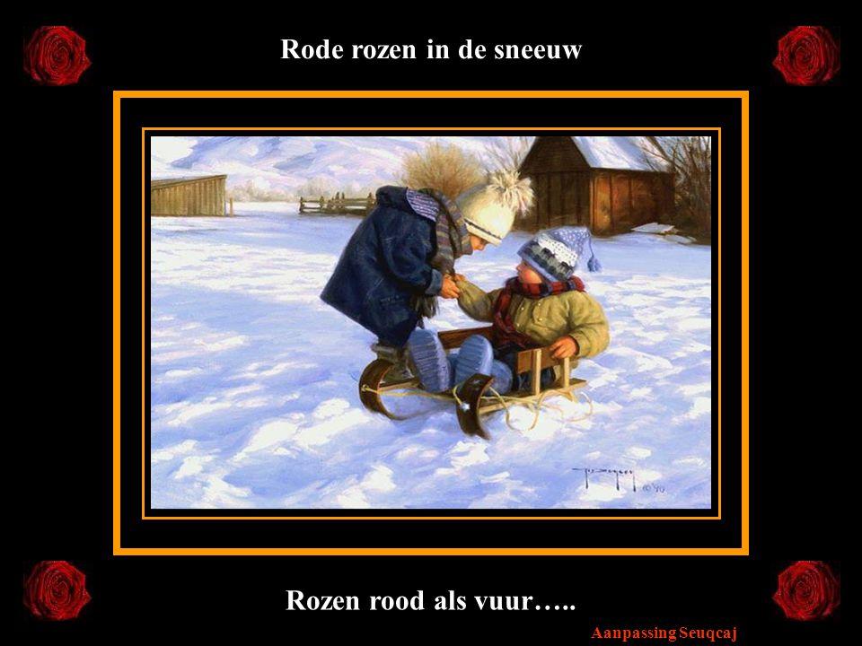 Rode rozen in de sneeuw Rozen rood als vuur…..