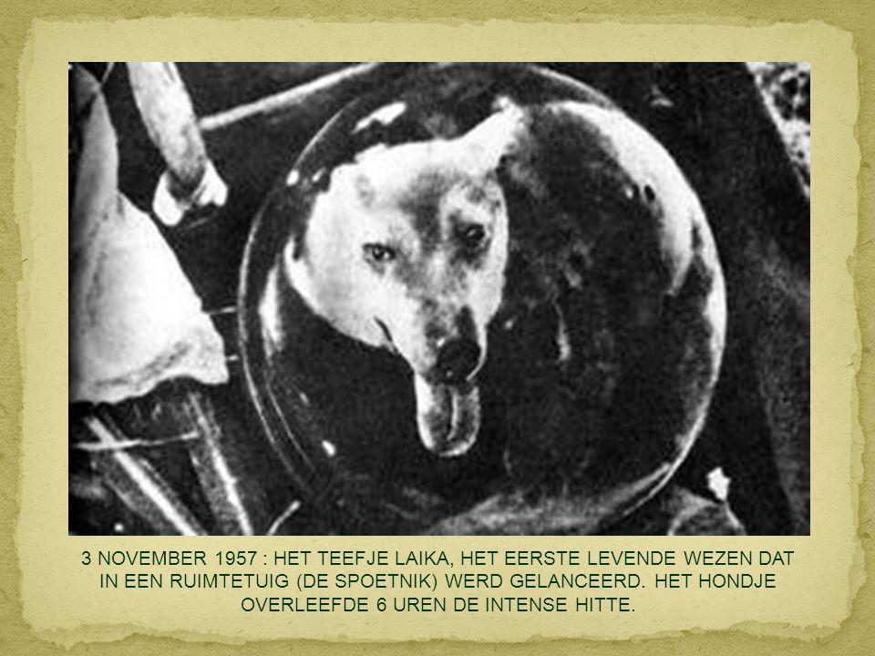 3 NOVEMBER 1957 : HET TEEFJE LAIKA, HET EERSTE LEVENDE WEZEN DAT IN EEN RUIMTETUIG (DE SPOETNIK) WERD GELANCEERD.