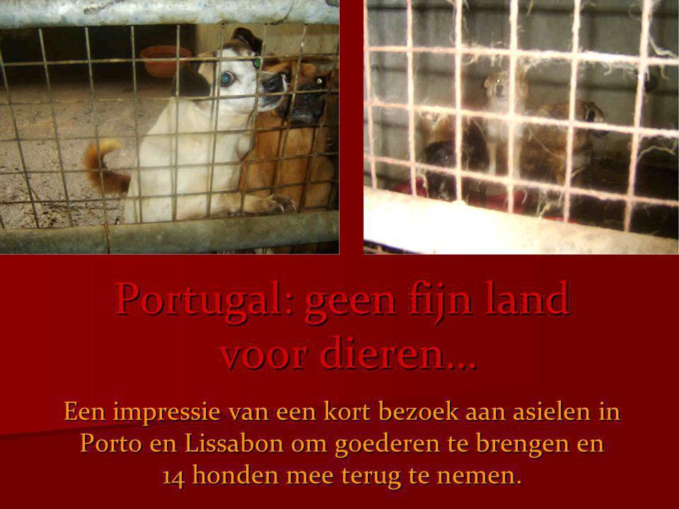 Portugal: geen fijn land voor dieren…