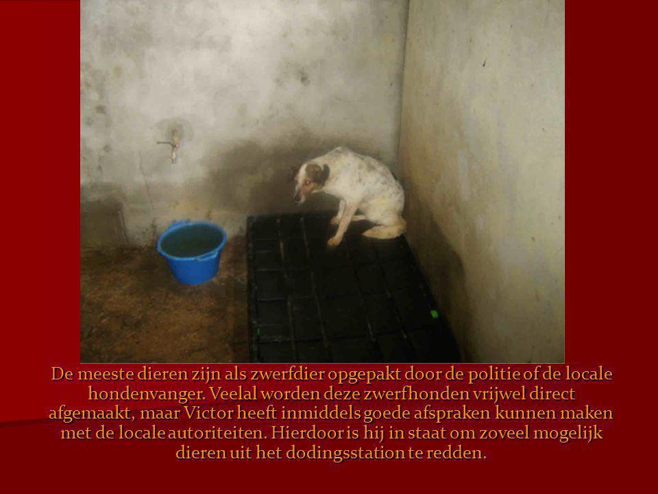 De meeste dieren zijn als zwerfdier opgepakt door de politie of de locale hondenvanger.