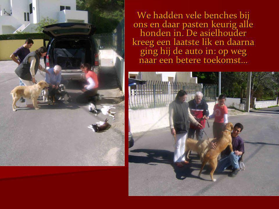 We hadden vele benches bij ons en daar pasten keurig alle honden in
