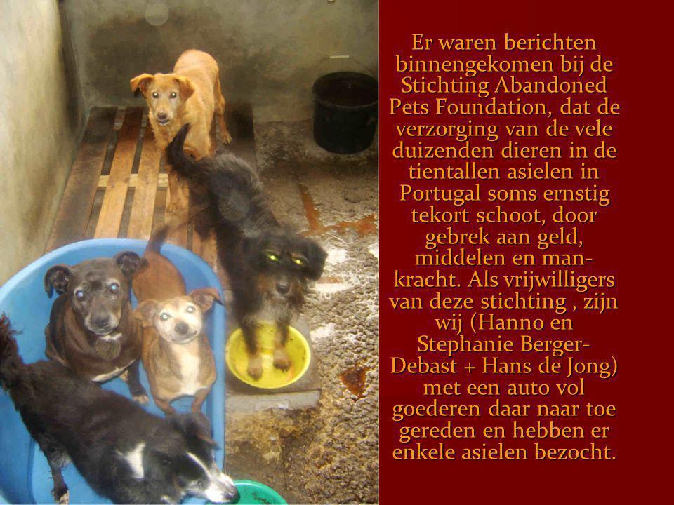 Er waren berichten binnengekomen bij de Stichting Abandoned Pets Foundation, dat de verzorging van de vele duizenden dieren in de tientallen asielen in Portugal soms ernstig tekort schoot, door gebrek aan geld, middelen en man-kracht.
