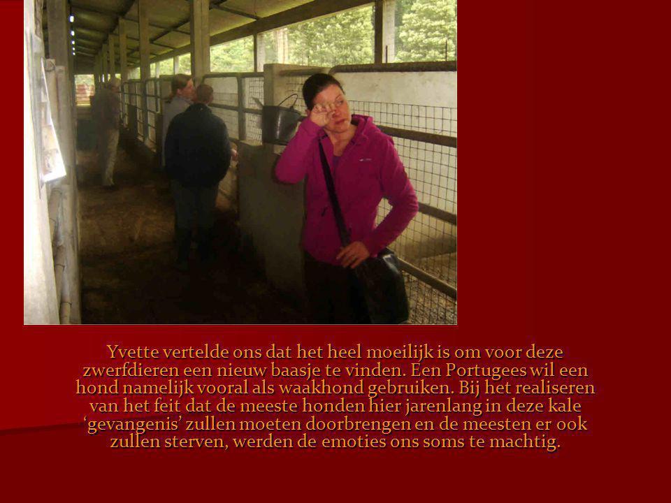 Yvette vertelde ons dat het heel moeilijk is om voor deze zwerfdieren een nieuw baasje te vinden.