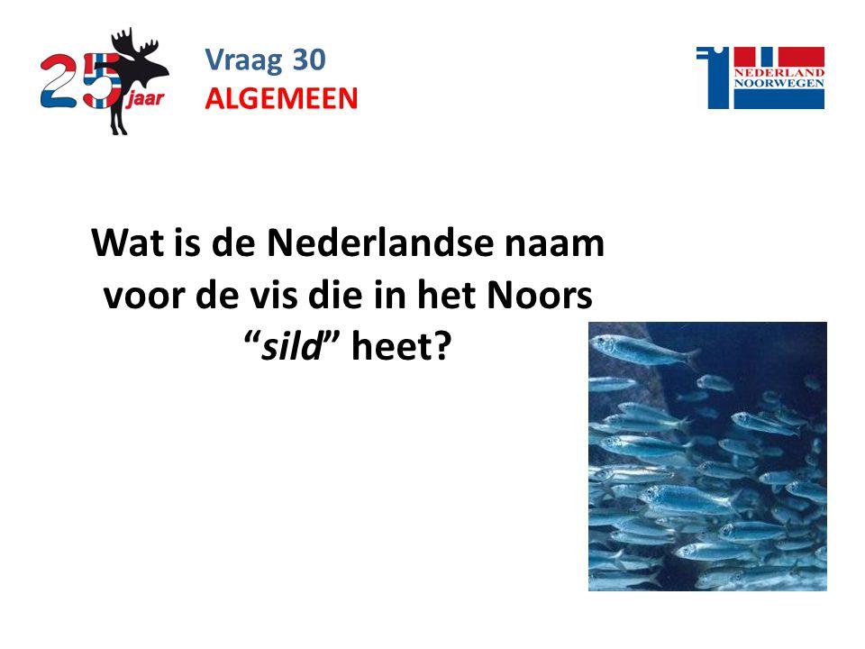 Wat is de Nederlandse naam voor de vis die in het Noors sild heet