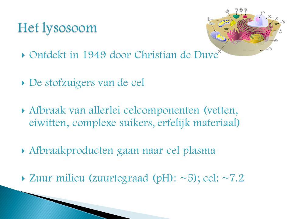 Het lysosoom Ontdekt in 1949 door Christian de Duve